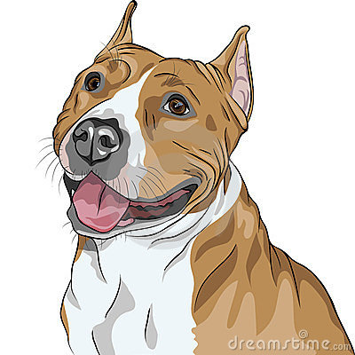 vector Dog American Staffordshire Terrier smiles
