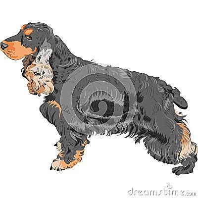 vector Dog black English Cocker Spaniel breed