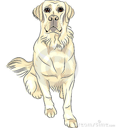 vector Dog breed white labrador retrievers sitting