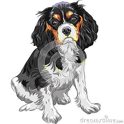 Vector dog Cavalier King Charles Spaniel
