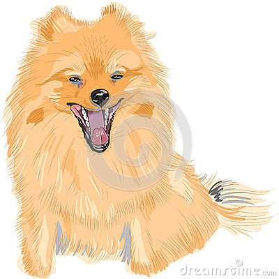 vector Dog German Toy Pomeranian breed smile