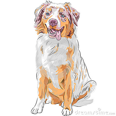 Free Vector Dog Red Australian Shepherd Breed Royalty Free Stock Images - 37506049