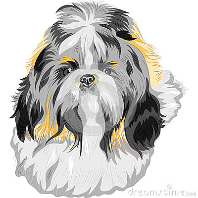 vector Dog Shih Tzu breed