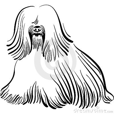 Vector Dog Tibetan Terrier breed