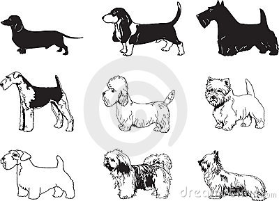 Vector Dogs Illustration