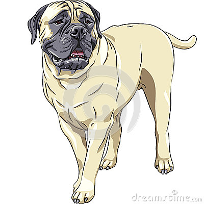 vector Domestic dog breed Bullmastiff sta