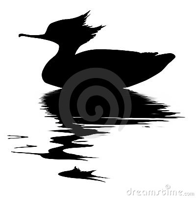 Vector drawing fish duck