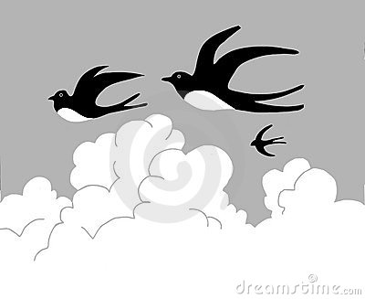 Vector drawing swallow