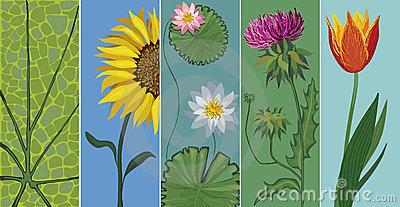 Vector editable set of flowers