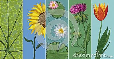 Vector editable set of flowers