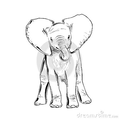 Hand drawn sketch of little elephant in black isolated on white background. Detailed vintage etching style drawing Vector Illustration