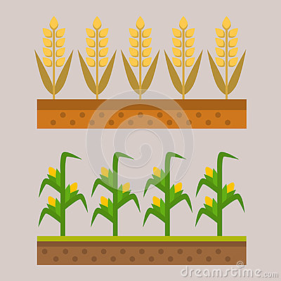 Free Vector Farm Harvesting Field Agriculture Horticulture Healthy Natural Land Vegetarian Vegetable Illustration. Royalty Free Stock Images - 94614349