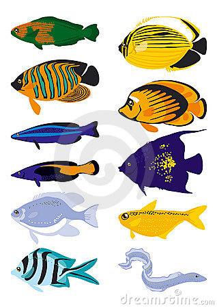 Free Vector Fish Royalty Free Stock Photo - 3052785