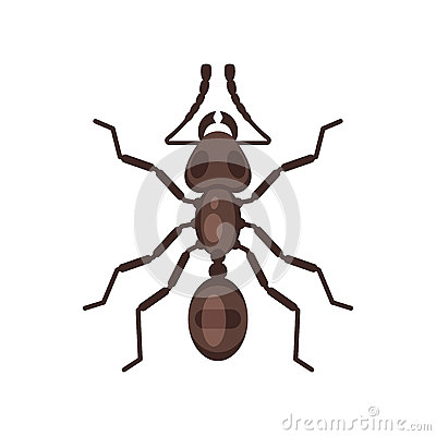 Vector flat style illustration of ant. Vector Illustration
