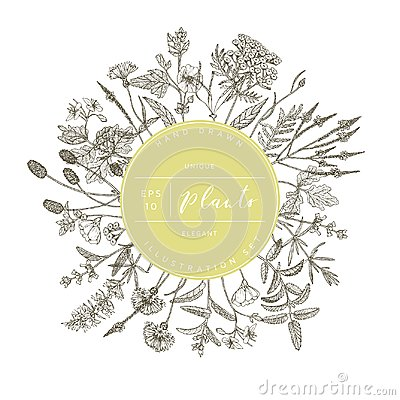 Free Vector Floral Banner. Royalty Free Stock Images - 112602559