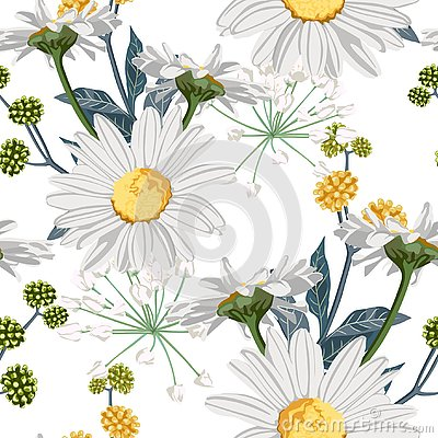 Vector floral seamless pattern with summer herbs, fern and chamomile camomile flowers. Stock Photo
