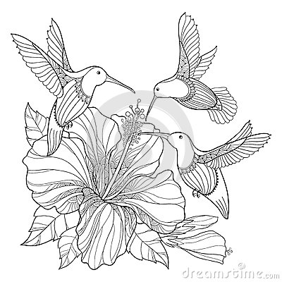 Vector Flying Hummingbird Or Colibri And Ornate Hibiscus In Contour