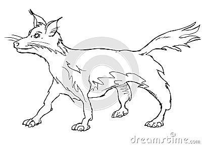 Vector fox vulpes vulpes fulva
