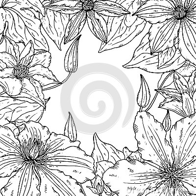 Vector frame with beautiful clematis flowers for greeting card or wedding invitation Vector Illustration