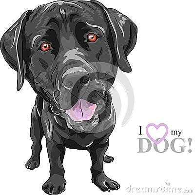 Vector funny cartoon black dog breed Labrador Retriever Stock Photo