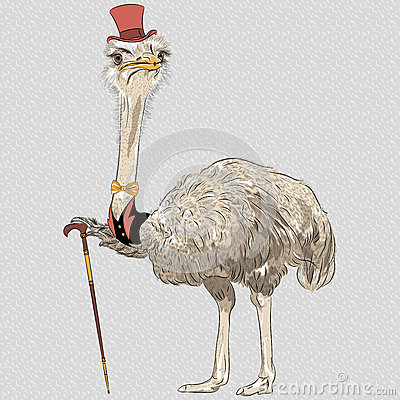 Free Vector Funny Ostrich Bird Hipster Stock Photo - 38631010