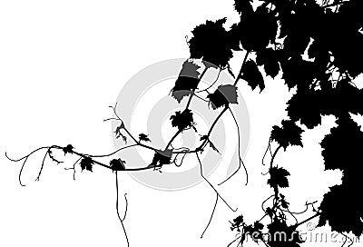 Vector Grape Vine