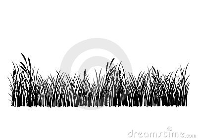 Vector grass isolated