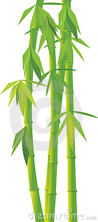 Vector green bamboo