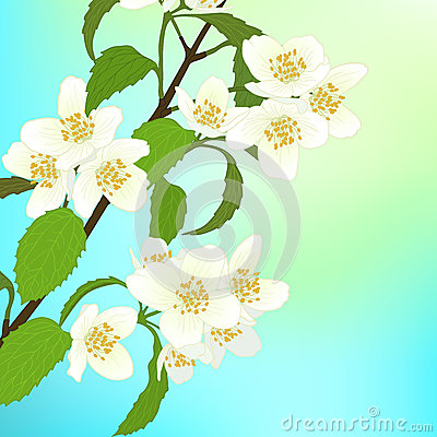 Vector greeting card with cherry blossom.