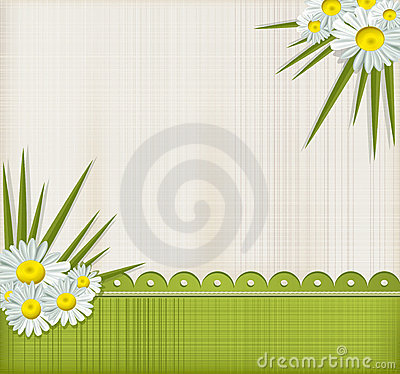 Vector greeting card with daisies