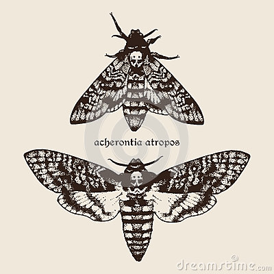 Free Vector Hand Drawn Deaths Head Hawk Moths Illustration. Stock Photography - 61948952