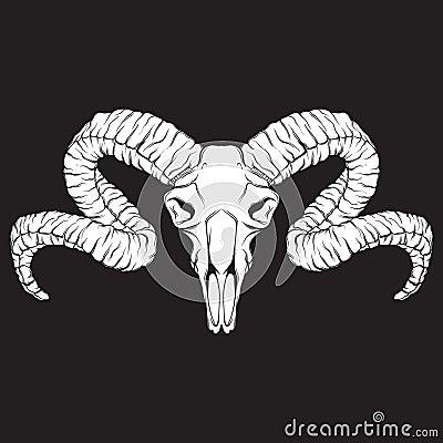 Vector hand drawn illustration. Artwork with skull of ram. Vector Illustration