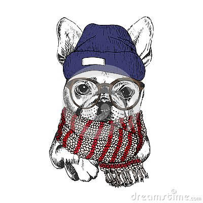 Free Vector Hand Drawn Portrait Of Cozy Winter Dog. French Bulldog Wearing Knitted Scarf, Beanine Andhipster Glasses. Royalty Free Stock Photos - 80949948
