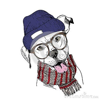 Free Vector Hand Drawn Portrait Of Cozy Winter Dog. Pit Bull Wearing Knitted Scarf, Beanine Andhipster Glasses. Royalty Free Stock Photo - 80950545