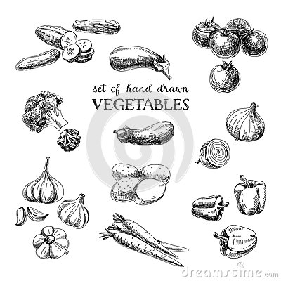 Free Vector Hand Drawn Sketch Vegetable Set. Eco Foods Royalty Free Stock Images - 57676569
