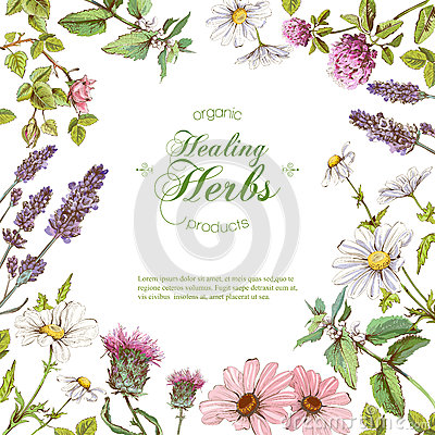 Free Vector Herbal Frame Stock Images - 85558764