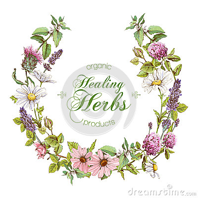 Free Vector Herbal Wreath Royalty Free Stock Images - 81853379