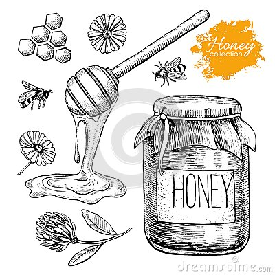 Free Vector Honey Set. Vintage Hand Drawn Illustration. Royalty Free Stock Images - 61979529