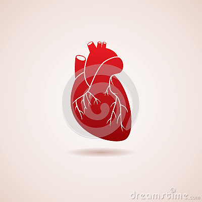 Free Vector Human Heart Icon Royalty Free Stock Photography - 36603797