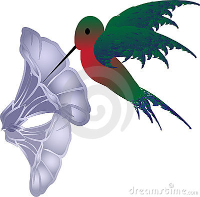 Vector hummingbird