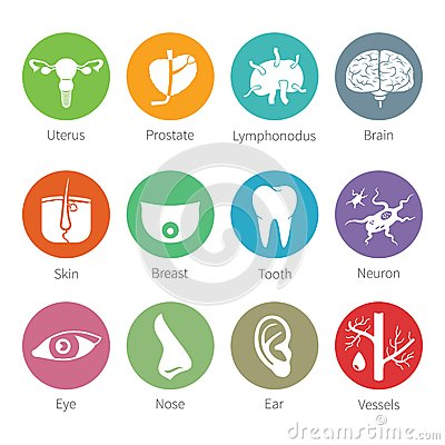 Free Vector Icon Set Of Human Internal And External Organs In Flat Style Stock Images - 45298914