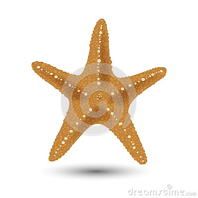Free Vector Illustration, Badges, Stickers, Starfish In Realistic Style Isolated On White. Print, Template, Design Element Stock Images - 107890394
