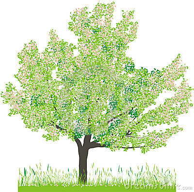 Vector illustration of cherry tree in spring