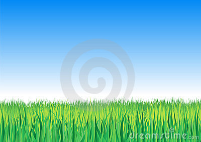 Vector illustration of detailed grass leaves on a