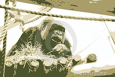 Vector illustration of gorilla