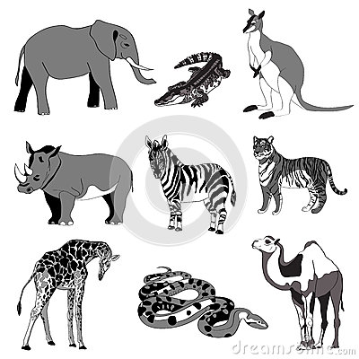 Vector illustration. Image rhino kangaroo, giraffe, elephant, zebra, snake, crocodile, camel, tiger. black and white. Vector Illustration