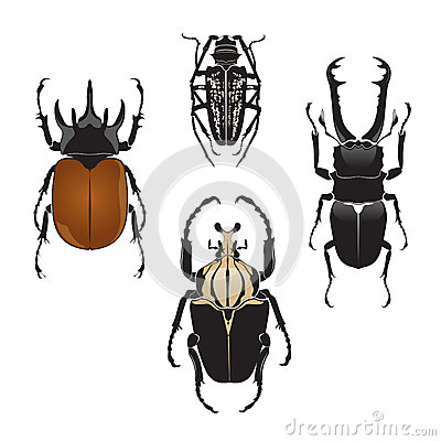 Free Vector Illustration Of Beetles Stock Photos - 46423033
