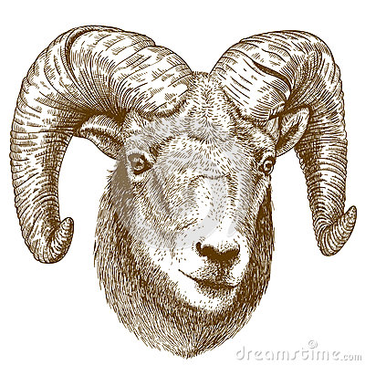 Free Vector Illustration Of Engraving Ram Head Royalty Free Stock Photos - 69393678