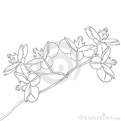 Vector illustration of orchid flower