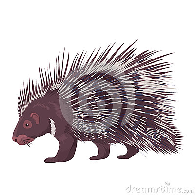 Free Vector Illustration Porcupine Isolated Royalty Free Stock Image - 94316686